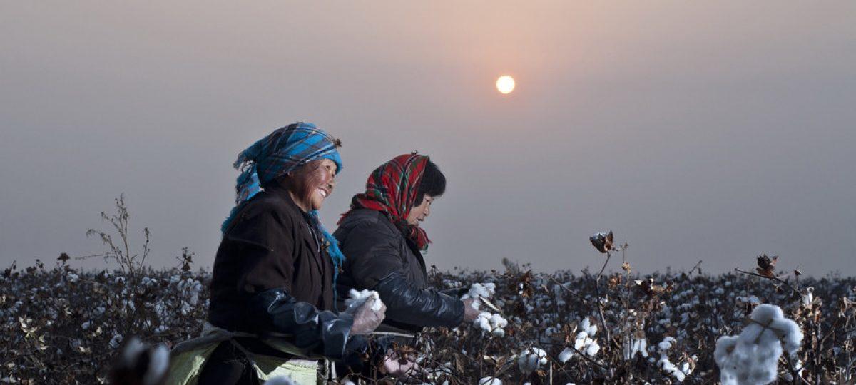 Sustainable Cotton - China