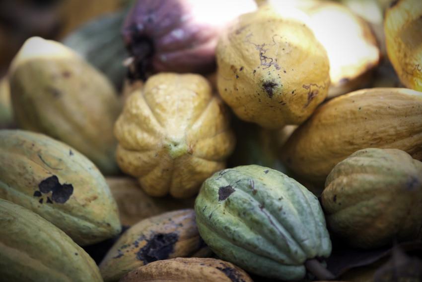 Cacao - Keke Keukelaar