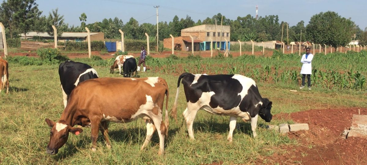 Melkveebedrijf in Kenia met eerste bedrijf van Smart Dariy