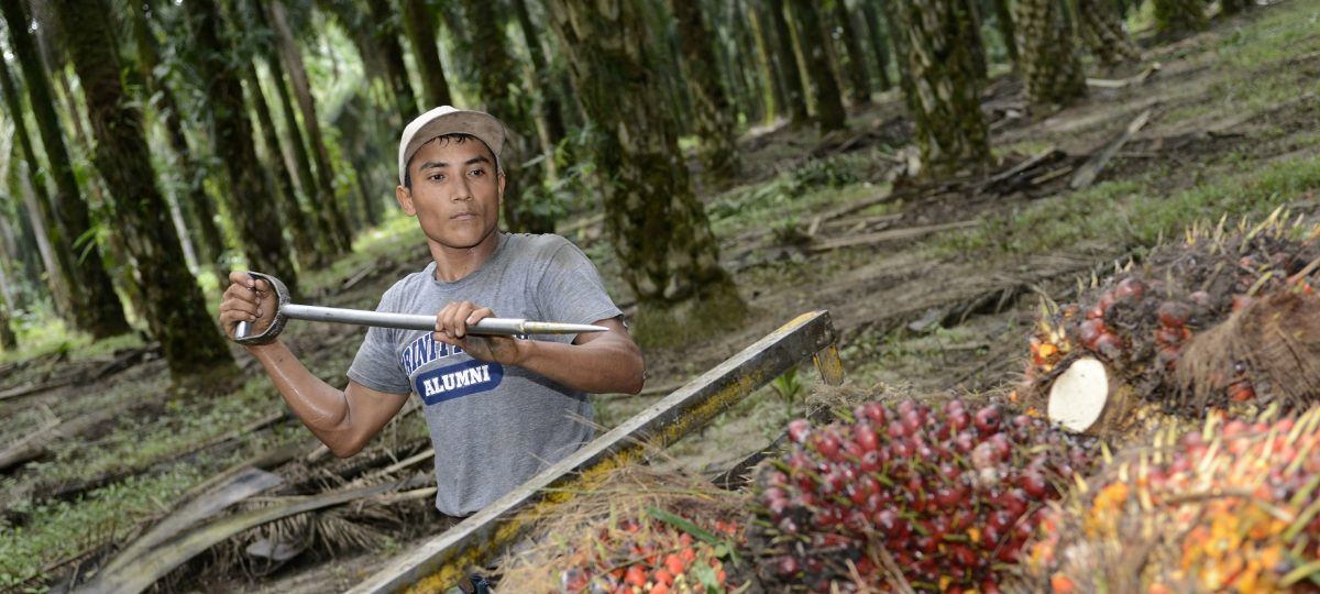 palm oil blog photo