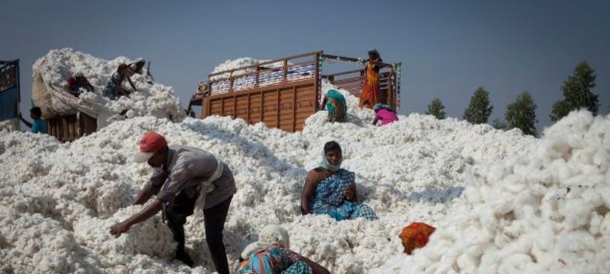 Cotton Ranking 2020 main image