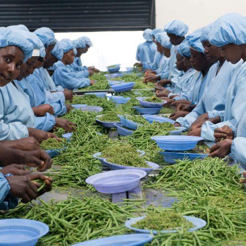 Food for all Kenya_1_Solidaridad