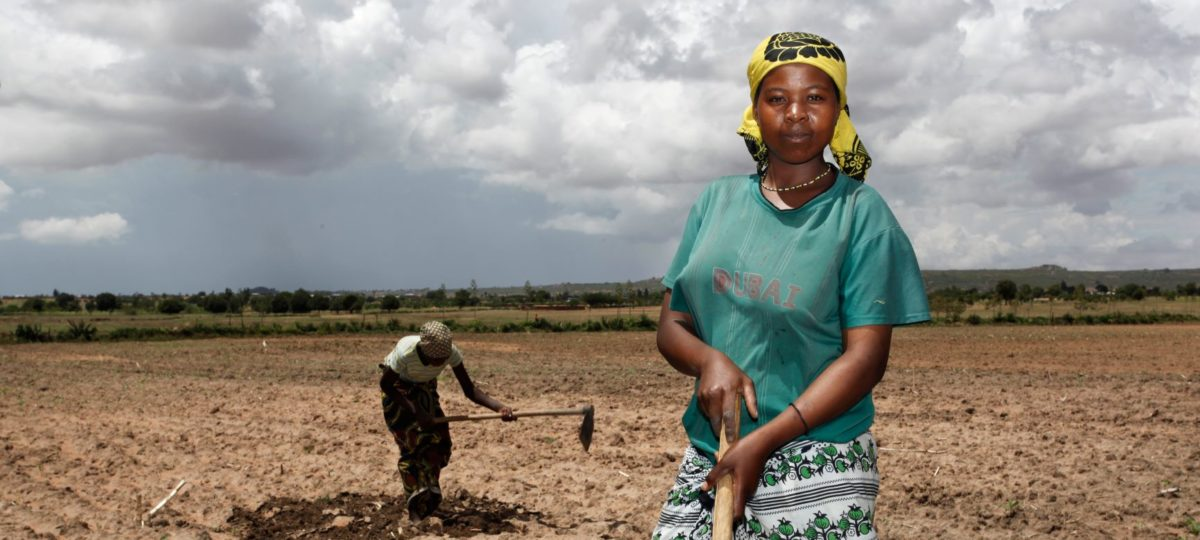vrouw aan het werk in katoenveld