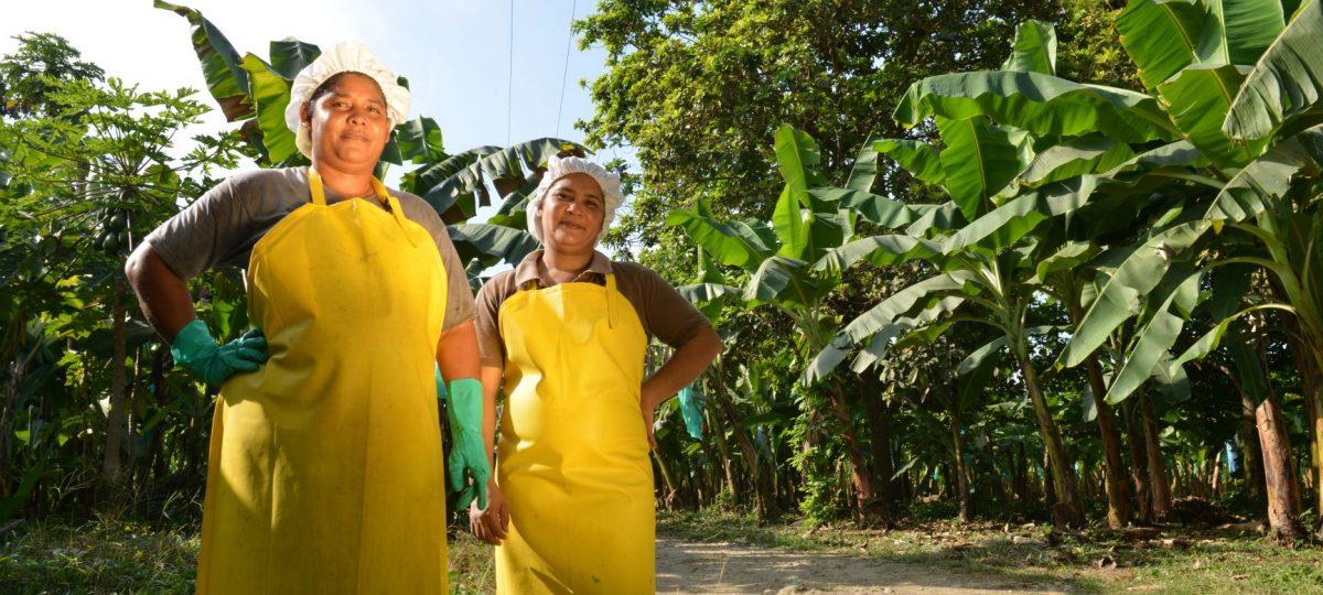Vrouwen aan het werk in het bananenplantage