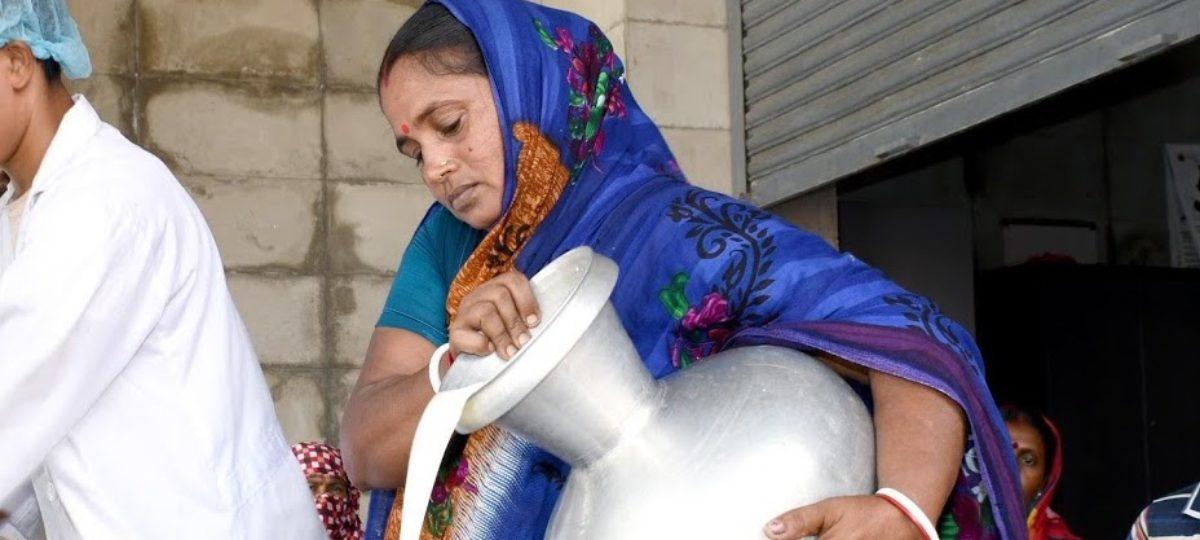 Vrouwelijke melkveehouder in Bangladesh